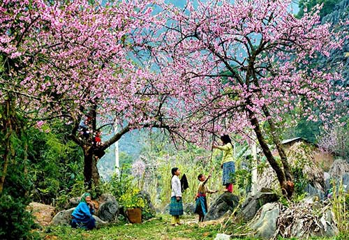 Sapa is covered by the colorful spring flowers
