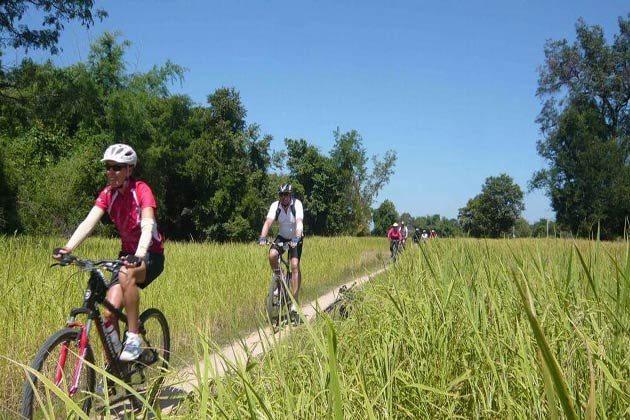 Cycle through the rice fields