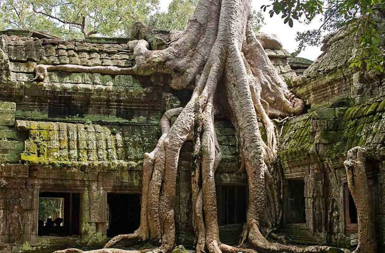Ta Prohm Temple is under hundreds-year-old fig root