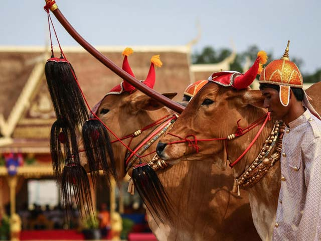 Witness the Old-age Ritual of Royal Ploughing Ceremony with Cambodia Tour Package