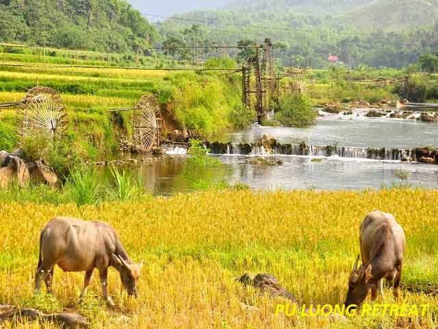 Trekking Tour In Northern Vietnam