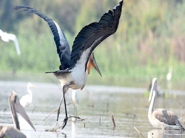 Indochina Bird Watching
