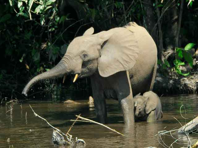 ELEPHANT SAFARI IN DAK LAK AND YOK DON NATIONAL PARK